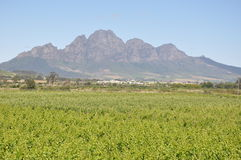 Stellenbosch  South Africa Cape wine country Royalty Free Stock Photos