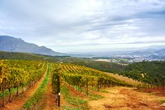 Vineyard mountains in Stellenbosch valley South-Africa. Stellenbosch is a town in the Western Cape province of South Africa, situated about 50 kilometres &#x28 royalty free stock image