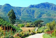 Stellenbosch-Weinberg in Südafrika Stockfotografie