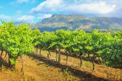 Stellenbosch-Weinberge Südafrika Lizenzfreies Stockfoto