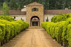 Stellenbosch wina region blisko do Kapsztad, Południowa Afryka Fotografia Stock