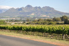 Free Stellenbosch Wine Region And Mountains Cape Winelands  South Africa. Stock Photo - 29719710