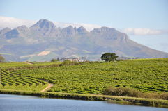 Stellenbosch and lake south africa. Stellenboschinmountainswithlake  winelands south africa Vineyards winery mountains country Stock Photos