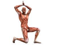 Stellende spieren Stock Foto's