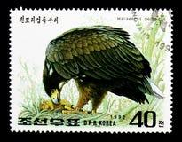 Steller \ 's Hav-Eagle (Haliaeetuspelagicusen), internationell stämpel Royaltyfri Foto