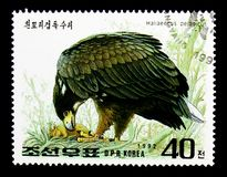 Steller\'s Sea-eagle (Haliaeetus pelagicus), International Stamp. MOSCOW, RUSSIA - NOVEMBER 24, 2017: A stamp printed in Democratic People\'s republic of Korea Royalty Free Stock Photo