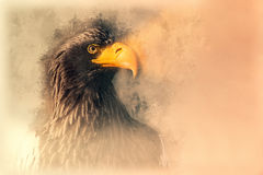 Stellers sea eagle sketch. Digital illustration Royalty Free Stock Photos