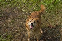 Stellte die Hundezwinger in der Sonne zufrieden Stockfotografie