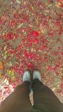 Stellung auf den Blumenblumenblättern Stockfotos