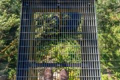 Stellung auf der Capilano-Hängebrücke stockfotografie