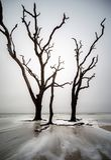 Stellung der hohen Bäume stille Brandung stockfoto