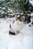 Stelt de mooie kat van de Kerstmiskaart voor een foto tegen de achtergrond van het bos royalty-vrije stock afbeeldingen
