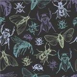 Stelt het hand getrokken vectorpatroon met insecten in verschillend Stock Foto