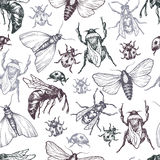 Stelt het hand getrokken vectorpatroon met insecten in verschillend Stock Afbeeldingen