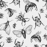 Stelt het hand getrokken vectorpatroon met insecten in verschillend Stock Foto's
