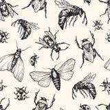 Stelt het hand getrokken vectorpatroon met insecten in verschillend Royalty-vrije Stock Foto