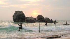 Steltvissers die, zonsondergang, nr Galle, SW-Kust vissen stock videobeelden