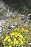 Stelvio Pass Stock Image