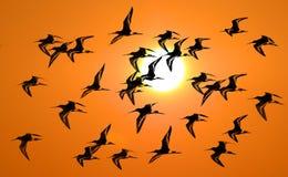 Stelzvogelvogel Lizenzfreies Stockfoto