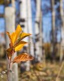 Stem autumn leaves Stock Photography