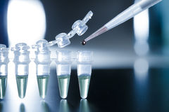 Stem cell research. In the PCR strip Royalty Free Stock Photos