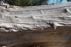 Stem Dry Stock Photo