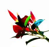 Stem Flower Color 22 Royalty Free Stock Images