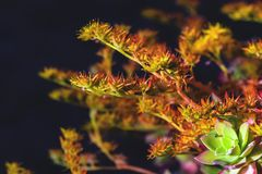 Stem and flower of wild plant in the foreground with green and orange tones stock image