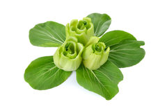 Stem of fresh baby Bok choy (Chinese cabbage) Royalty Free Stock Image
