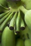 Stem of green banana Royalty Free Stock Photos