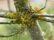Stem and lichen Royalty Free Stock Photos