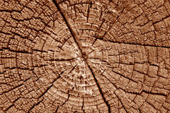 Stem of old tree. Background. Close up of old tree stem. Background Royalty Free Stock Images