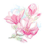Stem with ornate magnolia flower and buds in pink on white background with blots in pastel color. Floral elements in contour style royalty free illustration