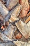 Stem of palm tree Stock Photo