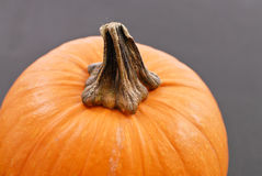 Stem On Pumpkin Royalty Free Stock Images