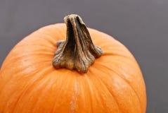 Stem On Pumpkin Royalty Free Stock Images