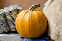 Stem of pumpkin. Close up Royalty Free Stock Photos