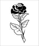 Stem roses Royalty Free Stock Image