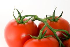 Stem with tomatoes Royalty Free Stock Images