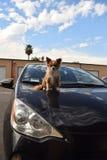Stem vóór het ` s mijn auto Royalty-vrije Stock Foto