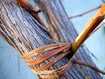 Stem of vine. Close-up steam of vine royalty free stock photos