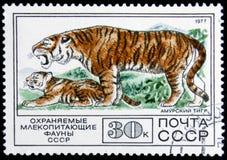 Stempel gedruckt in UDSSR, Shows Amur Tiger, circa 1977 Lizenzfreie Stockfotos