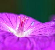 Stempel und Blume Lizenzfreies Stockfoto