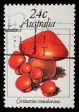 Stempel von Australien zeigt Bild eines Zimt webcap Stockfoto