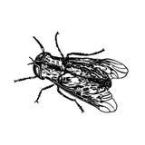 Stempelinsektenfliege stockbild