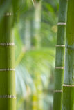 Stems of bamboo, green background. Nepal royalty free stock photos