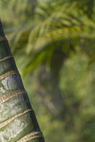 Stems of bamboo, green background. Nepal royalty free stock photo