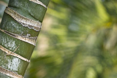 Stems of bamboo, green background. Nepal royalty free stock photography