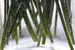 Stems&bubbles. Green stems in a glass vase, surrounded by air bubbles Royalty Free Stock Photo