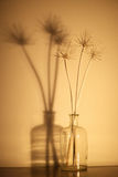 Stems of dry plants Royalty Free Stock Images